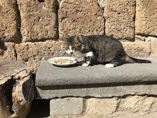 こちらを見る猫 - No.775688