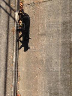 歩道を歩いている黒猫 - No.775896