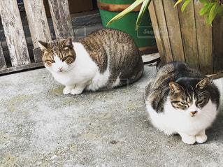 朝出会ったノラ猫たち - No.882687