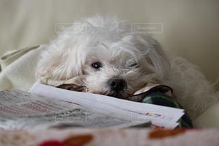 犬の写真・画像素材[252046]
