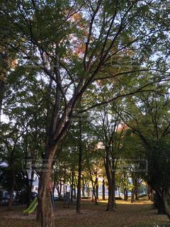 自然の写真・画像素材[256058]
