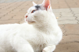 猫 - No.253059