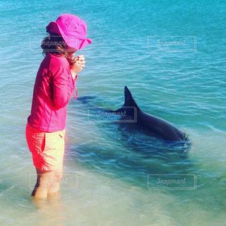 子ども,1人,海,イルカ,ふれあい