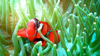 魚の写真・画像素材[282080]