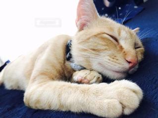 ベッドの上で横になっている猫 - No.814572
