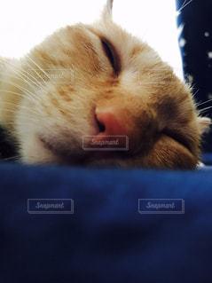 近くに猫のアップ - No.814577