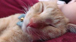 近くにベッドの上で横になっている猫のアップ - No.814579