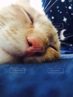 近くに猫のアップ - No.814581