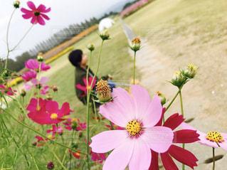 近くの花のアップの写真・画像素材[814585]