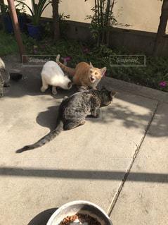 歩道の上に横たわる猫の写真・画像素材[817268]