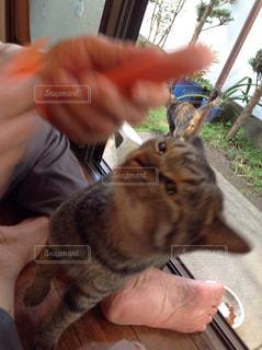 猫の写真・画像素材[835064]
