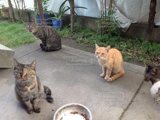 猫の写真・画像素材[835074]