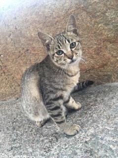 猫の写真・画像素材[252246]