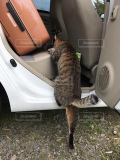 猫の外出の写真・画像素材[252582]