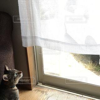 猫 - No.352934