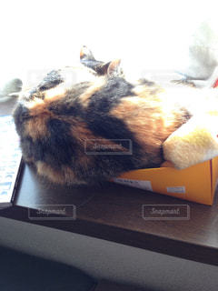 猫の写真・画像素材[356807]