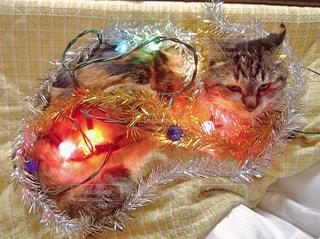 クリスマスの写真・画像素材[365918]