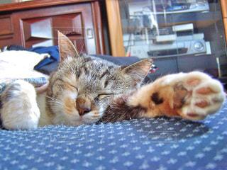 猫 - No.365941