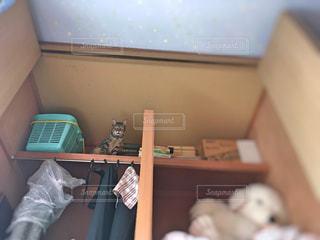 猫の写真・画像素材[366009]