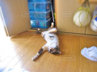 猫 - No.366344