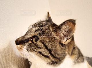 猫 - No.366957