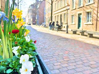 花の写真・画像素材[378062]
