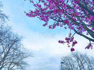 花の写真・画像素材[393687]