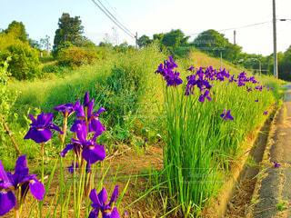 花の写真・画像素材[396298]