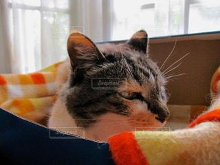 猫 - No.396556