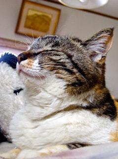 猫 - No.396613