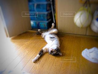 猫の写真・画像素材[397920]
