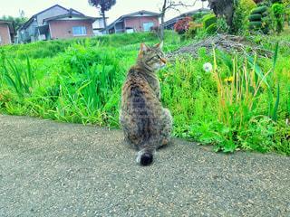 猫 - No.399326