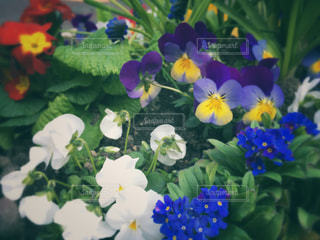 花の写真・画像素材[403694]