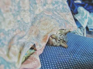 猫の写真・画像素材[407892]