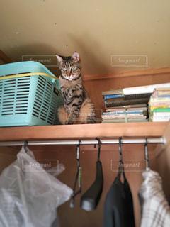 猫の写真・画像素材[412185]