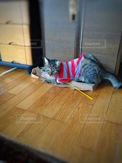 猫 - No.425194
