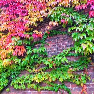 カラフルな植物の写真・画像素材[759840]