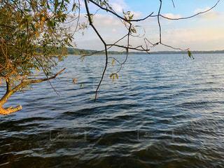 水の体の横にあるツリー - No.786701