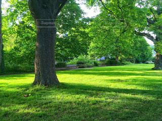 緑豊かな緑のフィールドの真ん中の木の写真・画像素材[936930]
