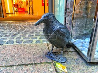 歩道に立っている鳥の写真・画像素材[936937]