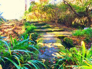 庭の茂みのグループの写真・画像素材[938101]