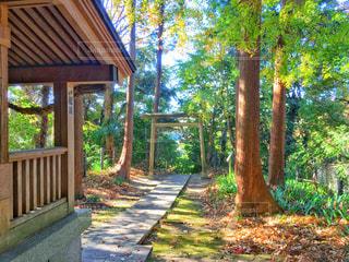 森と神社の写真・画像素材[938157]