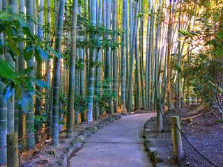 竹やぶの道の写真・画像素材[944064]