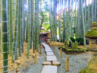 竹やぶの写真・画像素材[944186]