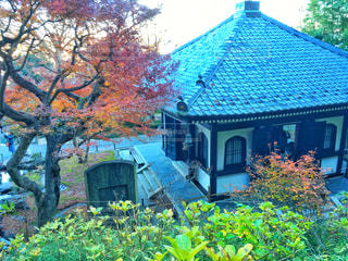 家の前に木の写真・画像素材[958968]