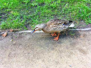 草の中に立っている鳥の写真・画像素材[1048459]