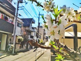 花の写真・画像素材[1062779]