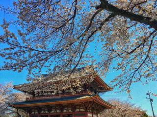 寺の写真・画像素材[1084207]