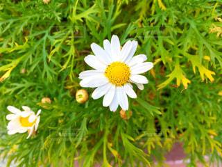 近くの花のアップ - No.1109287