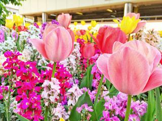 ピンクの花の写真・画像素材[1117063]